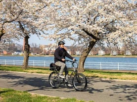 A Man Riding a Bike Among Cherry Blossoms