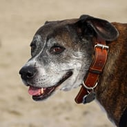 Photo of the dog of DQYDJ Founder PK