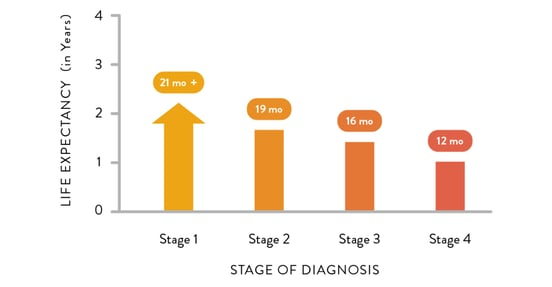 Mesothelioma life expectancy chart