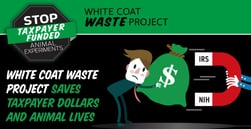 White Coat Waste Project Saves Taxpayer Dollars and Animal Lives by Exposing and Ending Wasteful Testing