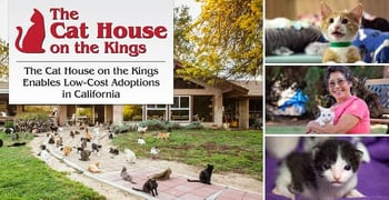 The Cat House On The Kings Enables Low Cost Adoptions