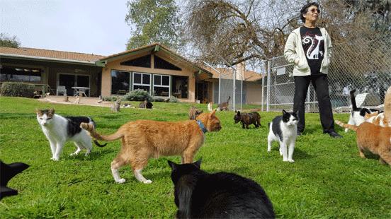 Lynea Lattanzio at The Cat House on the Kings
