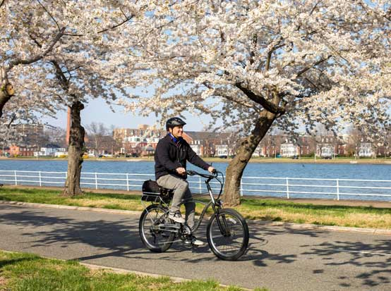 A Man Riding a Bike Among Cherry Blossoms