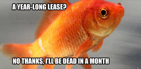 Try for a shorter lease