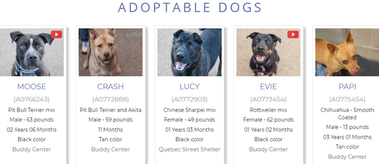 Screenshot from the DDFL's Adoptable Dogs Page